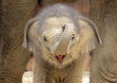 elefant-baby